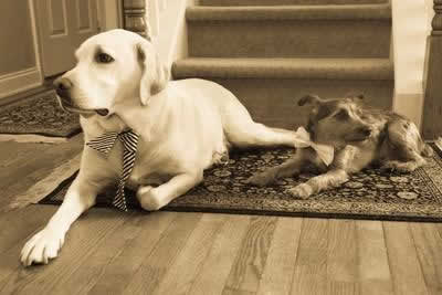 Stroudsmoor Country Inn - Stroudsburg - Poconos - Real Weddings - The Two Family Dogs
