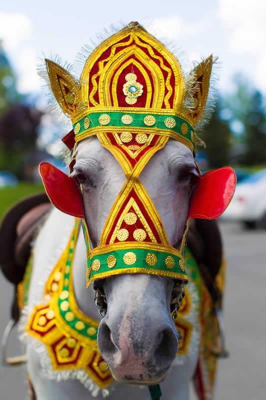 Stroudsmoor Country Inn - Stroudsburg - Indian Wedding - Poconos - Horse in Costume