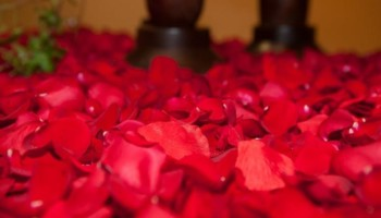 close up of red rose petals in a pile